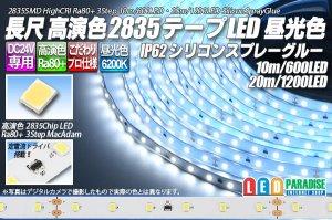 画像1: 24V SSG 2835テープLED 60LED/m 6200K 10m/20m
